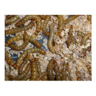 Ewww! Mealworms Postcard