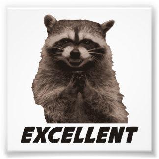 Excellent Evil Plotting Raccoon Photo Print