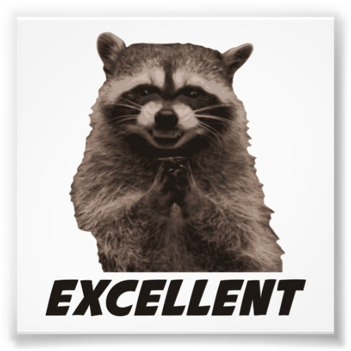 Scheming Raccoon Meme Excellent evil plotting raccoon photo print ...