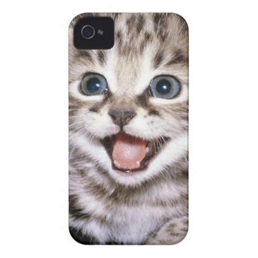 Excited kitten IPhone Case iPhone 4 Covers