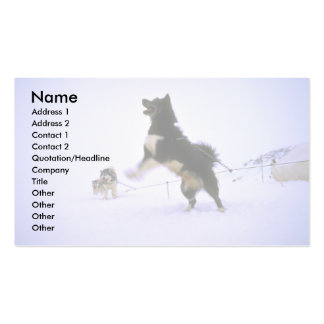 Excited sled dog business card templates