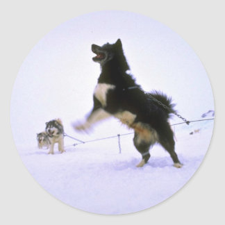 Excited sled dog classic round sticker