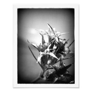 Exclamatory Photo Print