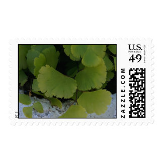 Exclusive Postage - Wall 044