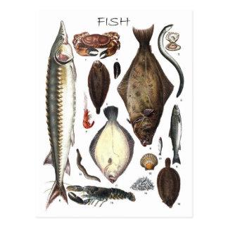 Exhibición de diversos tipos de pescados postales