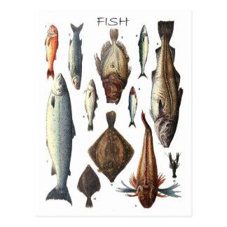 Exhibición de diversos tipos de pescados tarjetas postales