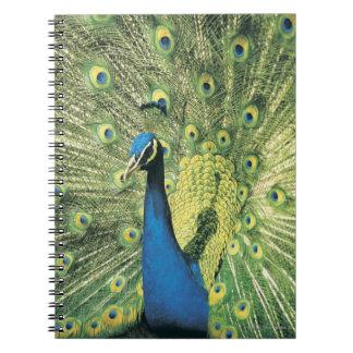 Exhibición del pavo real spiral notebooks