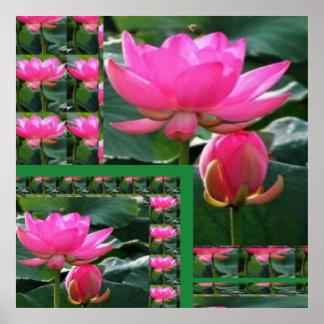 Exhibición floral de LOTUS Posters