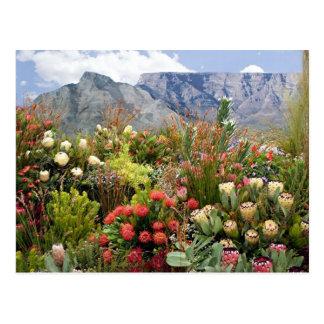 Exhibición floral surafricana de wildflowers tarjeta postal