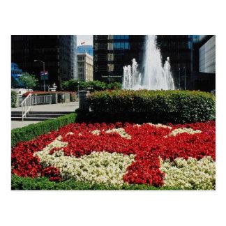 Exhibición roja y blanca roja de la hoja de arce,  tarjeta postal