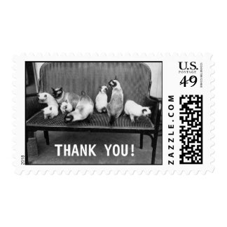 Exhibition Cat Club - Mondial 494   Thank You Postage
