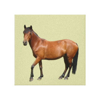 Exmoor Horse Wrapped Canvas Stretched Canvas Print