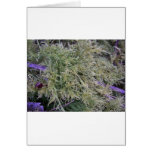 Exmoor plant and purple stems 1 cards