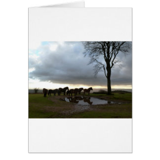 Exmoor Ponies Card