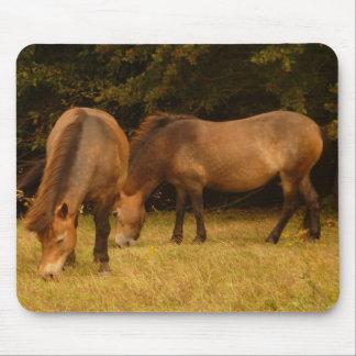 Exmoor Ponies Mousepad