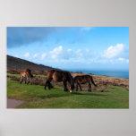 Exmoor Ponies Poster