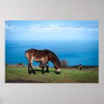 Exmoor Pony Foal Poster