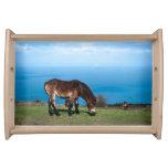 Exmoor Pony Foal Serving Tray