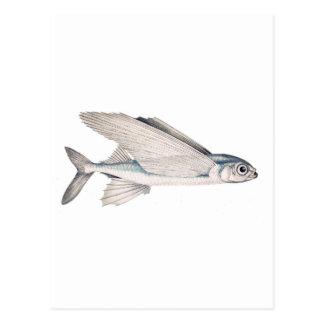 Exocoetidae del pez volador postales