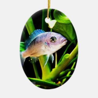 Exotic African Cichlid Fish Ceramic Ornament