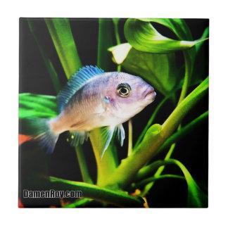 Exotic African Cichlid Fish Ceramic Tile