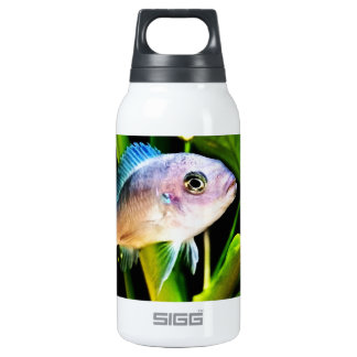 Exotic African Cichlid Fish Insulated Water Bottle