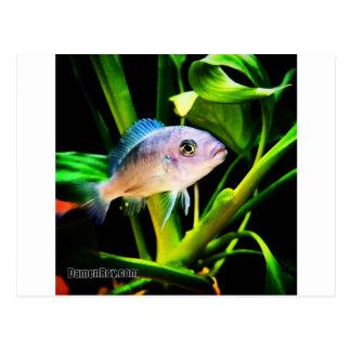 Exotic African Cichlid Fish Postcard