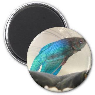 Exotic Betta Fish Closeup Magnet