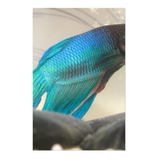 Exotic Betta Fish Closeup Stationery