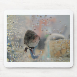 Exotic Betta Fish Looking At me Mouse Pad