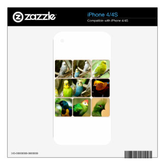 Exotic Bird Budgie iPhone 4 Skins