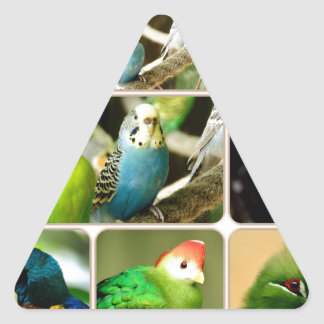 Exotic Bird Budgie Triangle Sticker