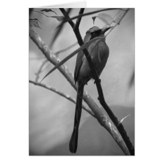 Exotic Bird in black & white Card