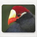 Exotic Bird Mousepad