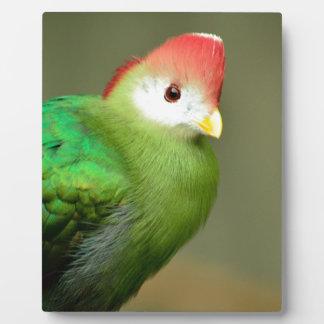 Exotic Bird Display Plaques