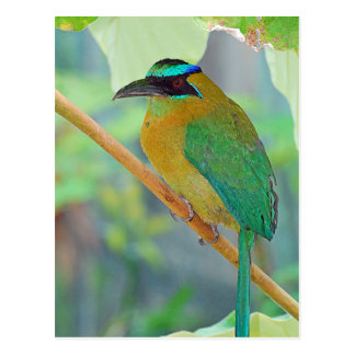 Exotic Bird Postcard