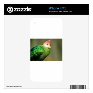 Exotic Bird Skin For iPhone 4S
