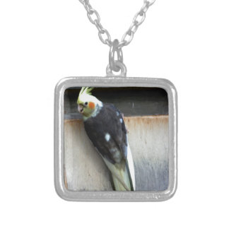 Exotic Birds Jewelry