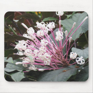 Exotic Blooms Mouse Pad
