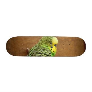 Exotic Budgie Bird Skateboard Deck