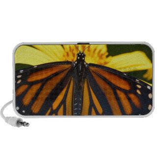 exotic butterfly haut-parleurs