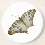 Exotic Butterfly Tropical Nature Photography Drink Coaster