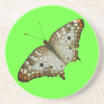 Exotic Butterfly Tropical Nature Photography Sandstone Coaster