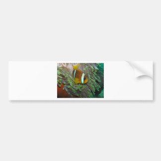 Exotic Clown Fish Bumper Stickers