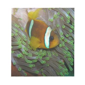 Exotic Clown Fish Scratch Pad