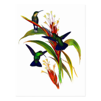 Exotic Colorful Hummingbirds Postcard