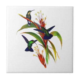 Exotic Colorful Hummingbirds Ceramic Tiles