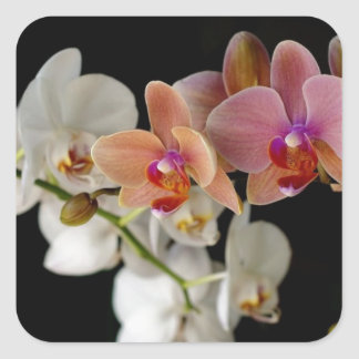 EXOTIC COLORFUL ORCHIDS SQUARE STICKER