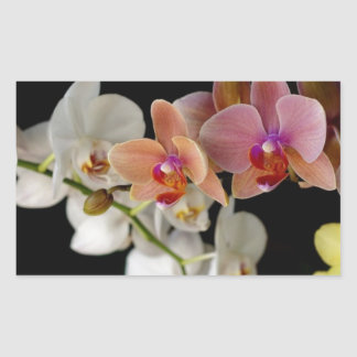 EXOTIC COLORFUL ORCHIDS RECTANGULAR STICKER