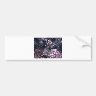 Exotic Fish Animal Bumper Stickers